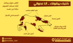 علامات الجسد عند الكلاب التي تدل على الخوف والعدوانية