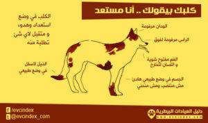 لغة الجسد في الكلاب تدل على الهدوء وتقبل الأوامر