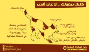 لغة الجسد في الكلاب تدل على اللعب والمرح