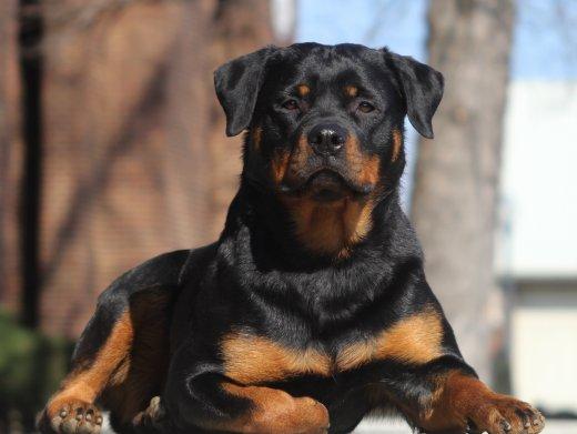 7 نصائح تساعد في تنعيم شعر الكلاب جميع انواعها