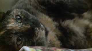 احرص على نوم القطط في الظلام أطول فترة ممكنة