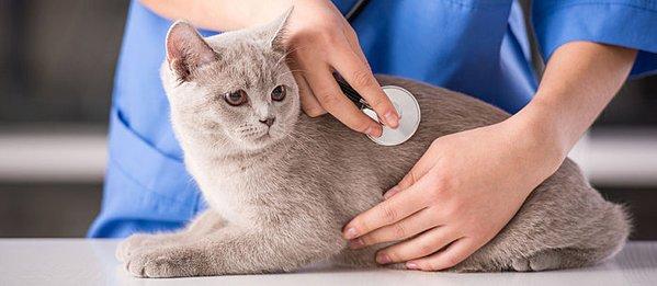 الكشف الدوري على القطط يقي القطة من الأمراض ويساعد في الكشف المبكر عنها