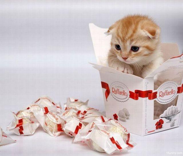 احرص على مكافآة قطتك مع كل فعل ايجابي