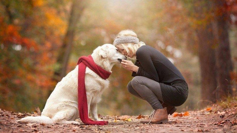 كيف اجعل كلبي يحبني وعلامات الحب في الكلاب