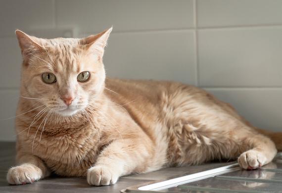 القطط تحب الجلوس على الأماكن التي تستخدمها لترك رائحتها فيها