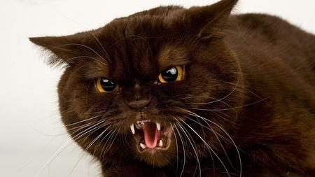 القطط تحتاج بعض الخصوصية لذلك عندما تصاب بالهياج عليك تركها وعدم اقتحام خصوصياتها