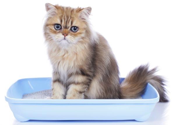 تظهر أعراض المرض عند جلوس القطة لفترات طويلة داخل الليتر بوكس بدون تبول