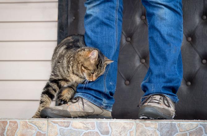 القطط تقوم بالاحتكاك باصحابها عند شعورها بالسعادة بقربهم حتى تترك رائحتها فيهم