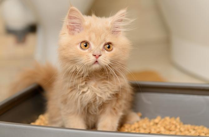 تتبول-القطط-على-حواف-الليتر-بوكس-عندما-يكون-ضيقا-عليها