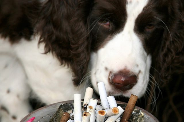 استنشاق الغازات السامة المنبعثة من الحرائق والسجائر تؤدي إلى سعال الكلاب