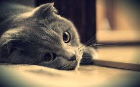 تصاب القطط بالخمول وعدم القدرة على الحركة بسبب مرض الكلى