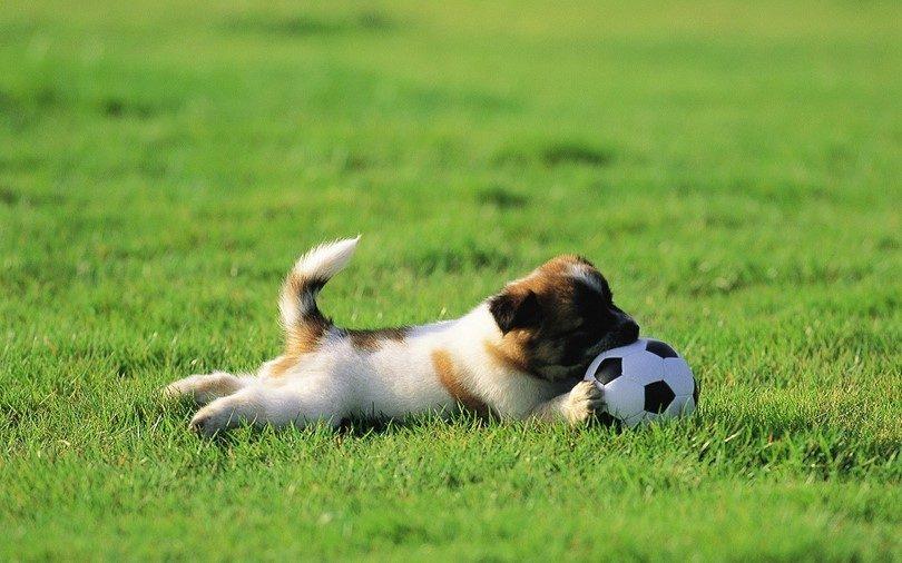 تصاب الكلاب بالحكة او الهرش بسبب الأعشاب او الحشرات او الأمراض الجلدية