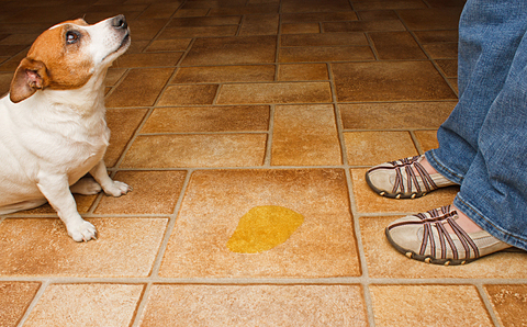 قم بتنظيف ما فعله الكلب وانصرف بدون ابداء أي رد فعل