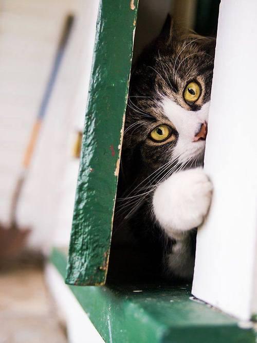 لا تسمح بفتح الباب بشكل يسمح بمرور رأس احد القطط بأي طريقة