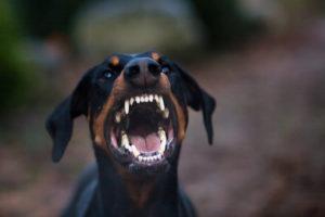 ما هي أسباب عدوانية وشراسة الكلب؟