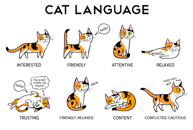 Cat Behaviours And Their Meaning