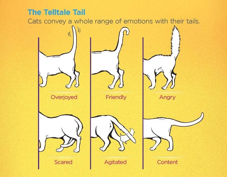 لغات ذيل القطط بالصور - المصدر : www.embracepetinsurance.com