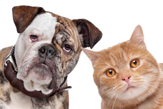 تحتاج القطط والكلاب كبيرة السن المزيد من الرعاية في ف فترات حياتها بعد السنة السابعة