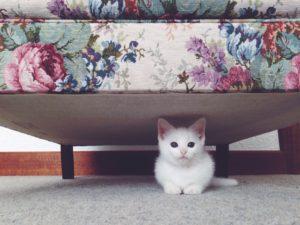 قطي يتبول على الفراش ما الحل ؟ بعض القطط لا تحب نوعية الرمل أو نوعية خامة صندوق الفضلات