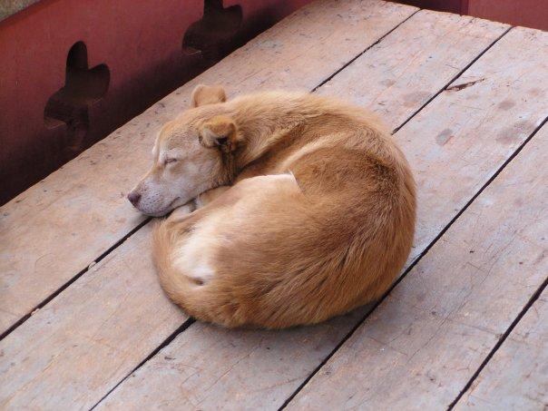 لماذا تحب الكلاب النوم بشكل دائري - تفسير تصرفات الكلاب