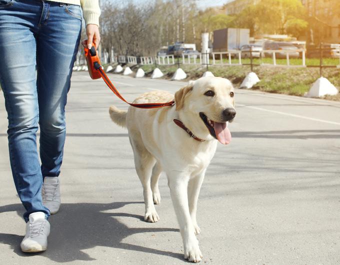 تدريب الكلب على المشي بالسلسلة أو كيفية تدريب الكلاب على المشي بجانبك قد يكون أحد التحديات التي تواجهك في تدريب كلبك. نوضح لك الخطوات بالتفصيل خاصة في كيفية منع كلبك من سحب السلسلة المقيد بها.