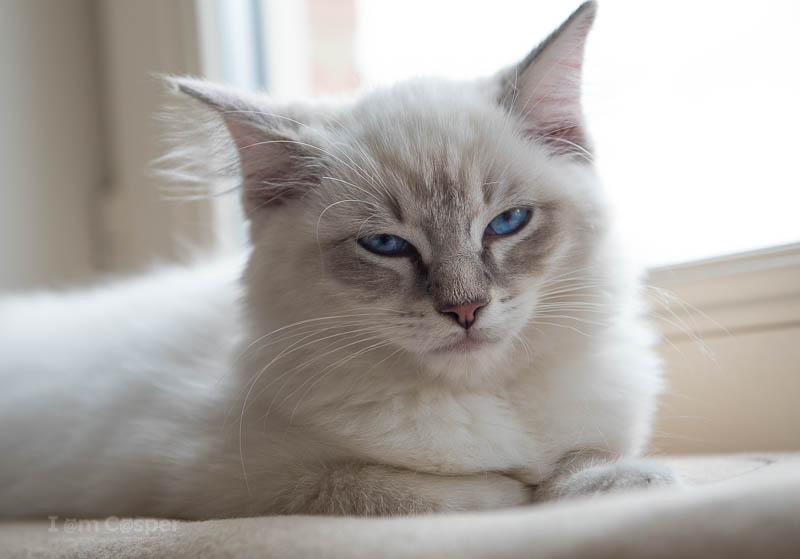 تعبر القطط عن حبها عن طريق غلق عينيها ببطء عدة مرات وهذه الحركة معناها الحب في لغة القطط