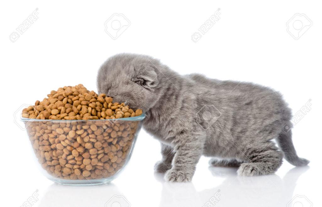 لا تستخدم أطباق عميقة في طعام القطط