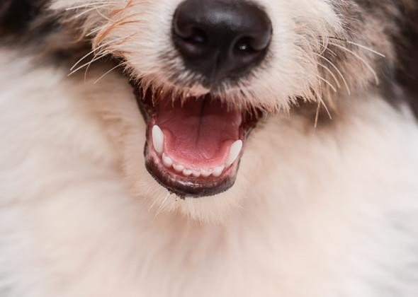 مشاكل الأسنان قد تسبب ظهور الرائحة الكريهة في الكلاب وبخاصة في نفس الكلب
