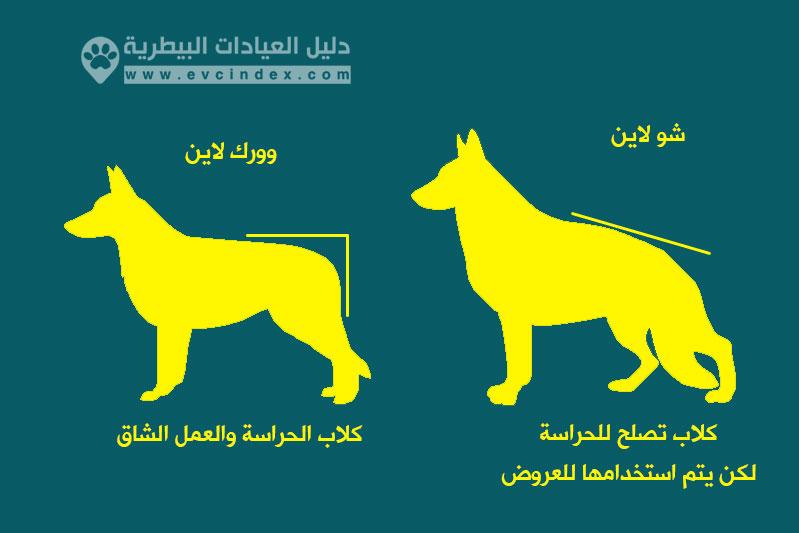 الفرق بين شو لاين و ورك لاين في سلالة كلاب جيرمان شيبرد