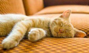 تغيير عادات نوم القطط يجب أن يبدأ بدفعها للقيام بالنشاط أثناء فترات النهار